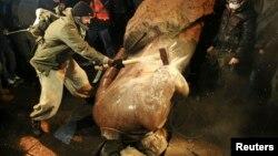 Повалений і знищений пам'ятник Леніну в Києві. 8 грудня 2013 року