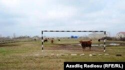 Aranlı kəndində idman meydançası
