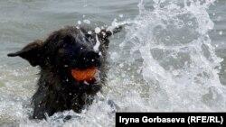 Тренировка собаки на выносливость в воде