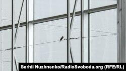 Птахи залітають у зал на останньому поверсі