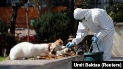 Opštinski uposlenik u zaštitnom odelu zbog pandemije korona virusa hrani ulične mačke u Istanbulu, 10. april