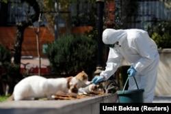 Бездомным кошкам в Стамбуле во время эпидемии помогают волонтеры.