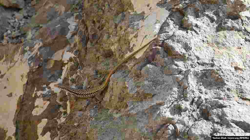 Гекон спостерігає за відпочивальниками зі скелі