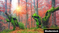 Ілюстраційне фото. Ліс на Закарпатті