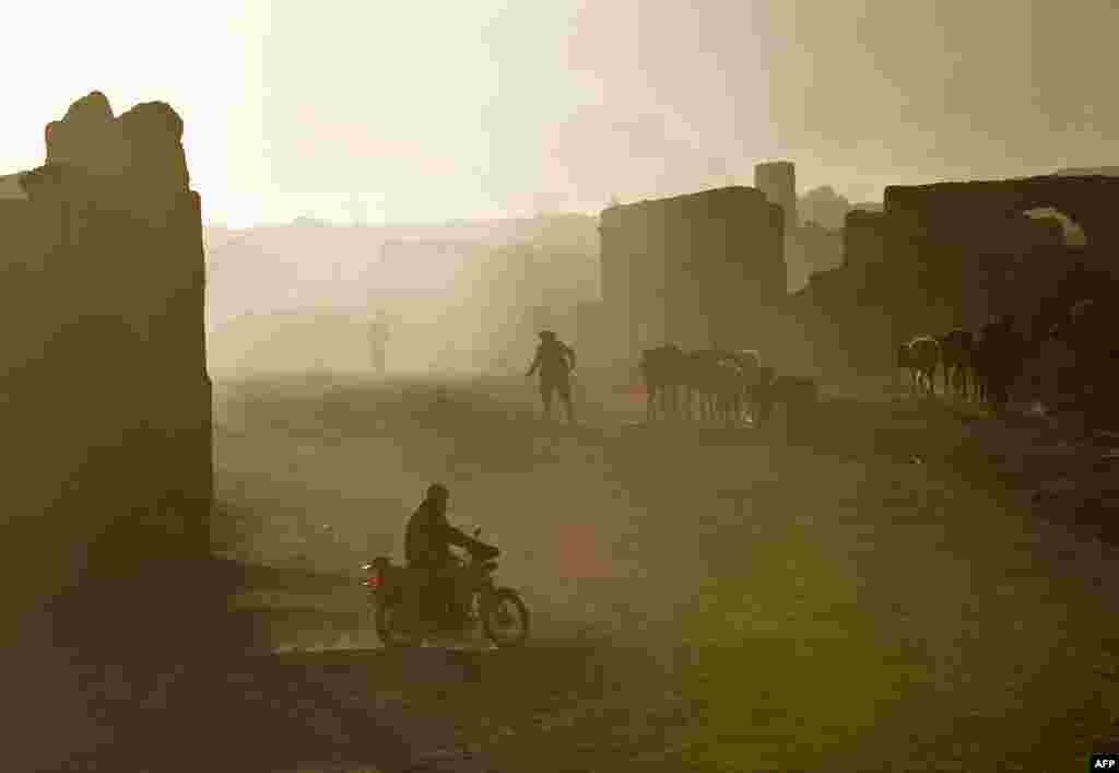 A Hazara shepherd walks with his flock.