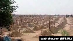 Гробови во Туркменистан во кои се верува дека се погребани жртви од ковид-19