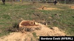 Posečeno drveće zbog gondole u Beogradu