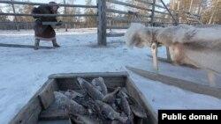 Ханты-Манси автоном бүлгесендә яшәүче хант хатын-кызы