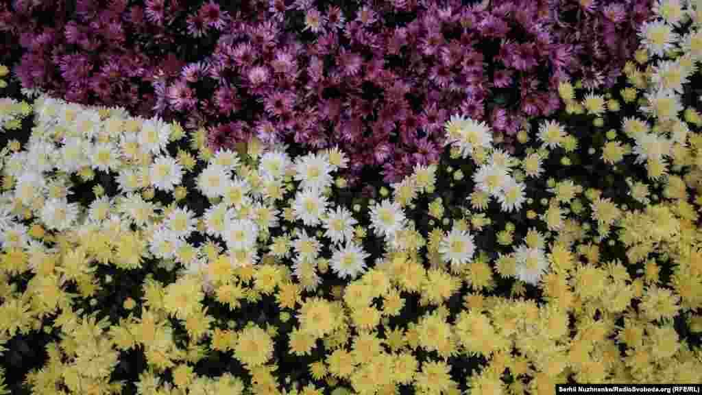Цветочный фестиваль работает ежедневно с 9 до 21 часа.