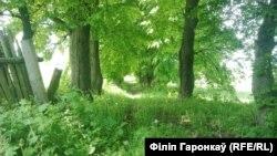 Ліпавая алея, якую высадзіў Каліноўскі. Аўтар: Філіп Гаронкаў