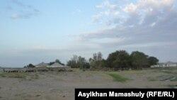 Пастух гонит скот в село в Жанакорганском районе Кызылординской области. Июль 2012 года.