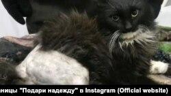 Кот Степа