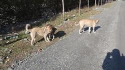 საქართველოში მიუსაფარი ცხოველების რეგიონული თავშესაფრები უნდა აშენდეს