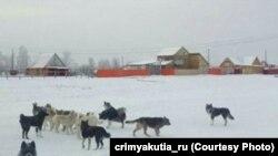 Собаки в поселке Намцы, архивное фото