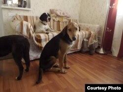Собаки, спасенные из Сочи