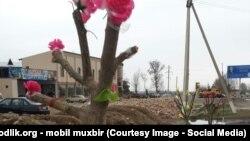 """Перед приездом Ислама Каримова в Намангане деревья """"зацвели"""" искусственными цветами"""