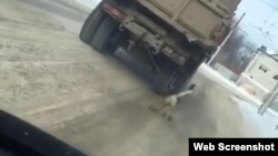 В Черкесске водитель привязал собаку к грузовику