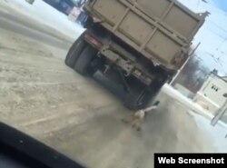 Водитель привязал собаку к грузовику