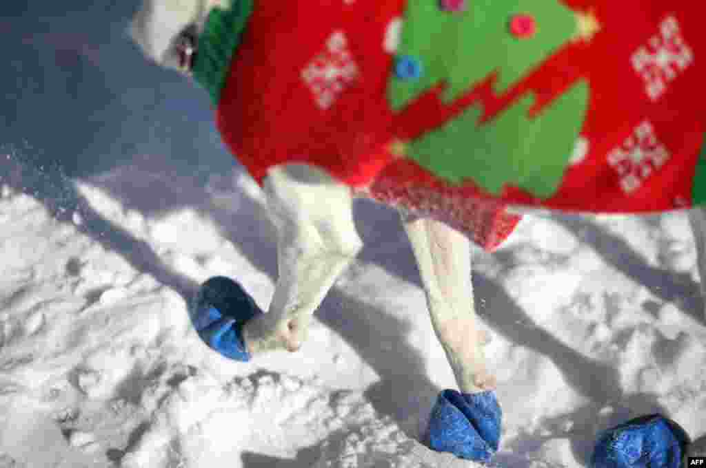 Kyona, a rescue dog from Japan, wears booties in a New York City park after an overnight snowfall.