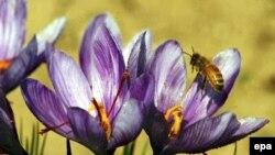 Дендрологи очень просят самарцев беречь их цветы