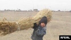 10-летний Елимжан, сын Гульданы Смагуловой, несет камыш. Поселок Белькопа, Актюбинская область. 11 ноября 2009 года.