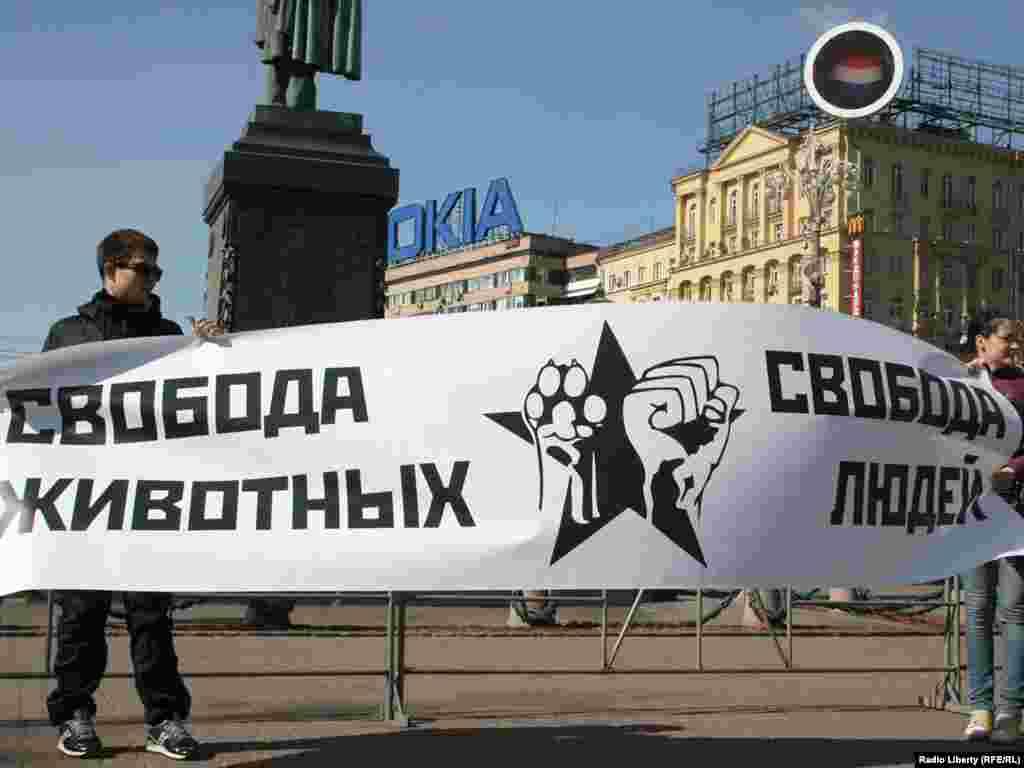 На Пушкинской площади в рамках всероссийской акции «Россия без жестокости» прошел митинг в защиту бездомных животных.
