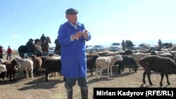 Мал догдур, Нарын облусу. 2015-жыл