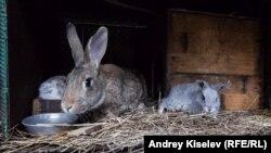 """Кроликов разводят в """"социальном доме"""""""
