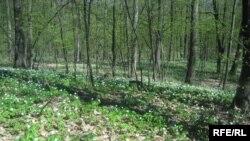 ۴۰ سال پيش حدود ۱۸ ميليون هکتار جنگل در ايران وجود داشت