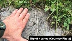 Петроглифы, обнаруженные участниками экспедиции 2019 года