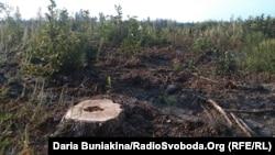 Вирубані дерева, Черкаська область