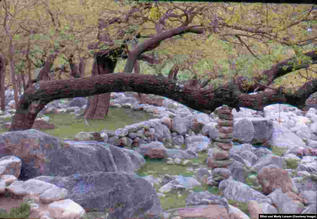 A tree supported by a stack of stones in Nuristan.
