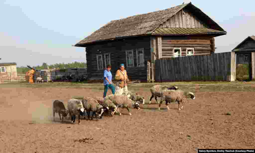 Locals herd sheep as they pass through a village.