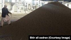 فابریکه پروسس جلغوزه در کابل