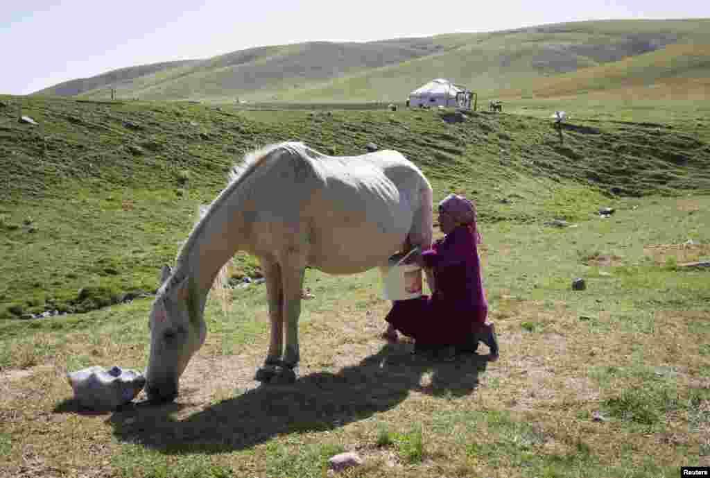 Dzhamilya Boribayeva milks a horse.