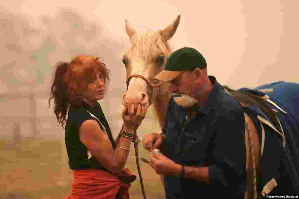 Спасатели дают обезболивающее пострадавшему в пожаре коню