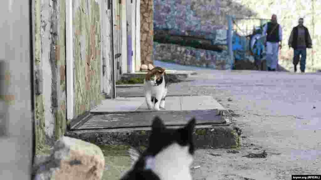 Холеные коты рыбацкого поселка