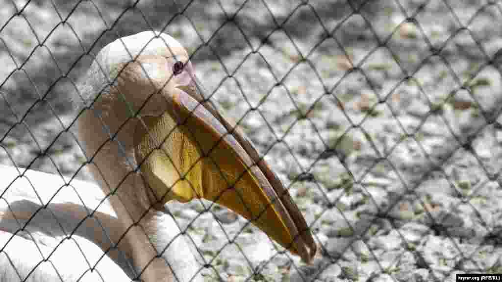 Здесь живут десятки видов птиц. Среди них и пеликаны