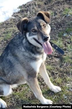 Собака, врятована у Волгограді