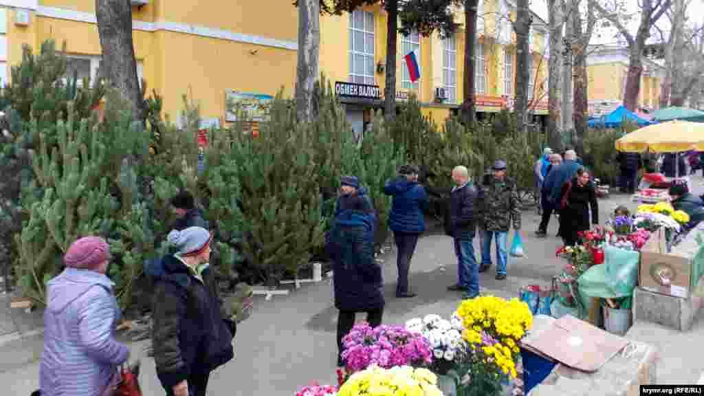 Yaltada - terekniñ öksekligine bağlı - narat ve çam fiyatları 500 - 2000 ruble