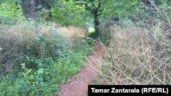 ზუგდიდის ბოტანიკური ბაღი
