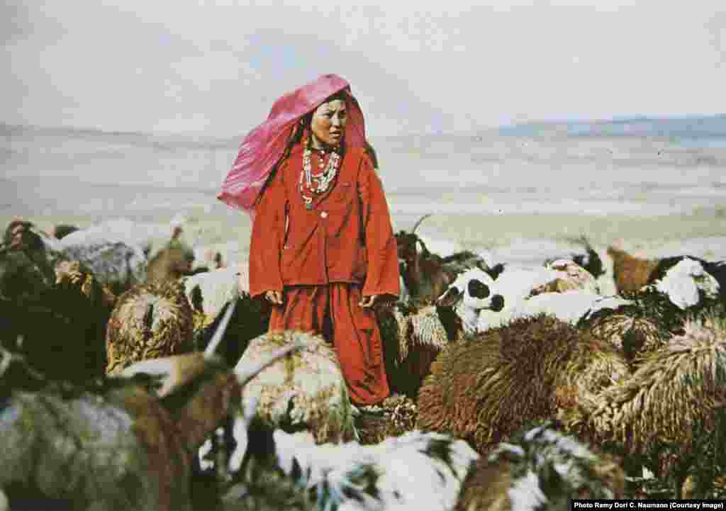 An archival photo of a young woman with her flock in the Pamir Mountains. Poorer families tended the sheep and goats of the richer tribe members.