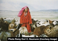 A Pamir Kyrgyz woman watches over sheep and goats in the panhandle of Afghanistan.