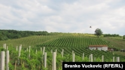 Timočka Krajina u istočnoj Srbija poznata po proizvodnji vina, vinogradi, septembar, 2010.