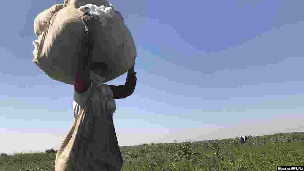 Граждане Узбекистана,приехавшие на юг Казахстана собирать хлопок. Мигранты из соседней страны не первый год заняты на уборке хлопка в Казахстане. Туркестанская область, 2 октября 2018 года. Фото корреспондента Азаттыка Дилары Исы.