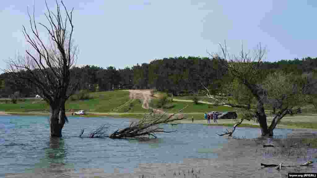 К середине жаркого лета вода от старых деревьев отойдет подальше