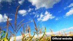 помощью биотехнологий из растений можно добывать биотопливо