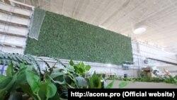 «Зеленая стена» в новом терминале аэропорта «Симферополь»