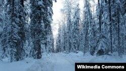 """""""Зимник"""" в Якутии, идущий через лес"""