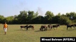 Foto: Mirsad Behram